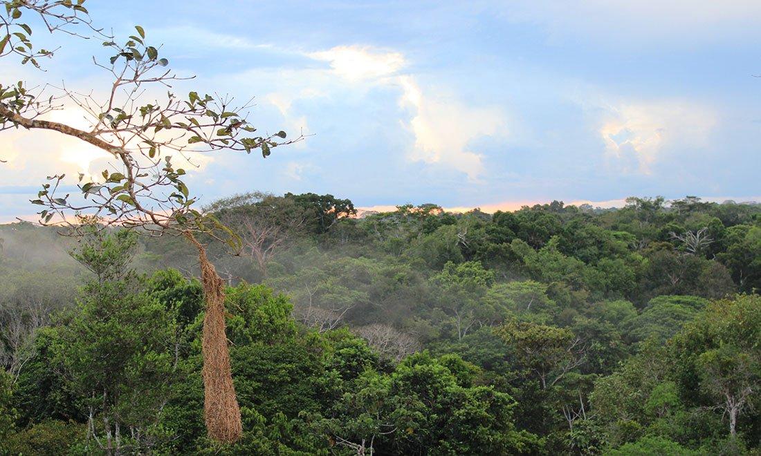 Amazonas, Brazilien