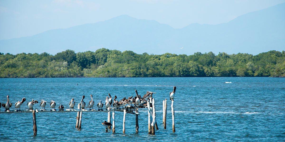 Fåglar i El Salvador