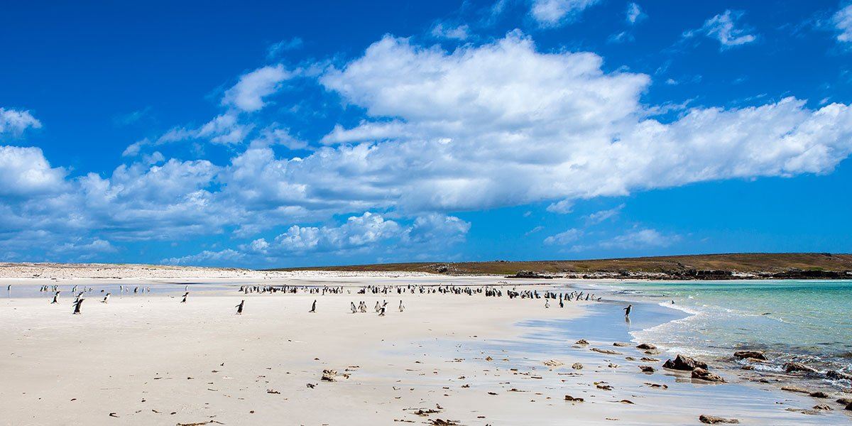 Bild från Falklandsöarna