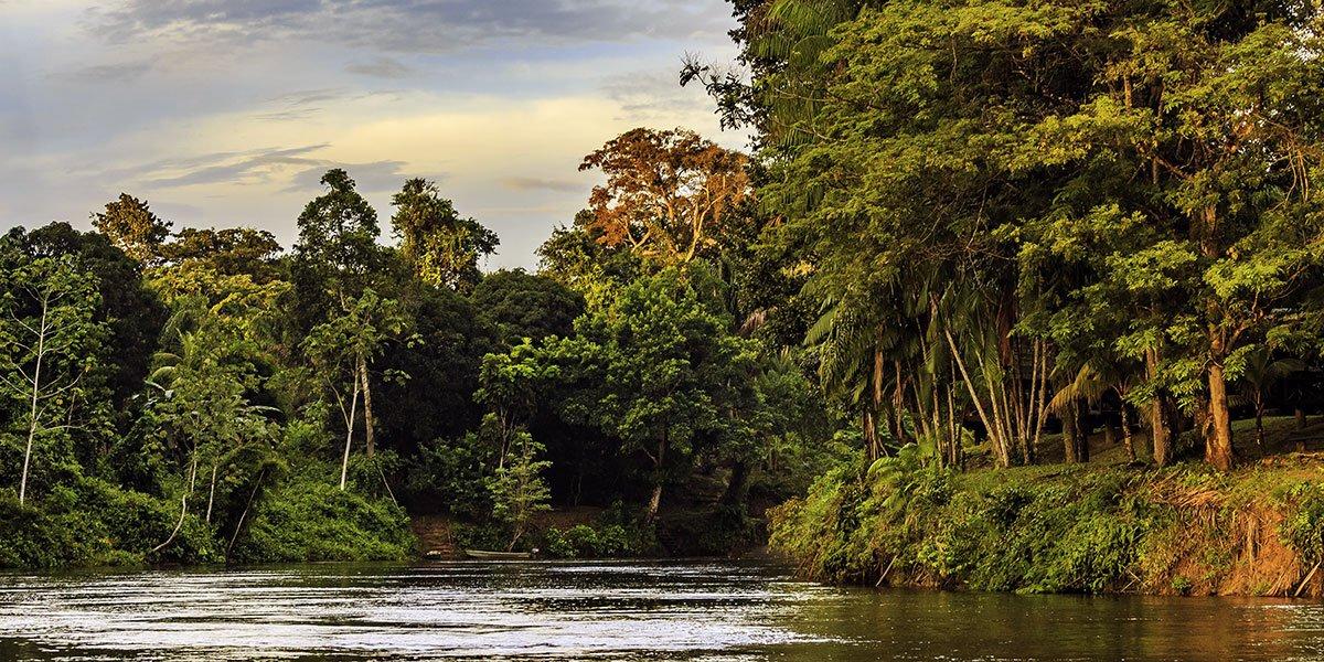 Tropisk djungel i Surinam