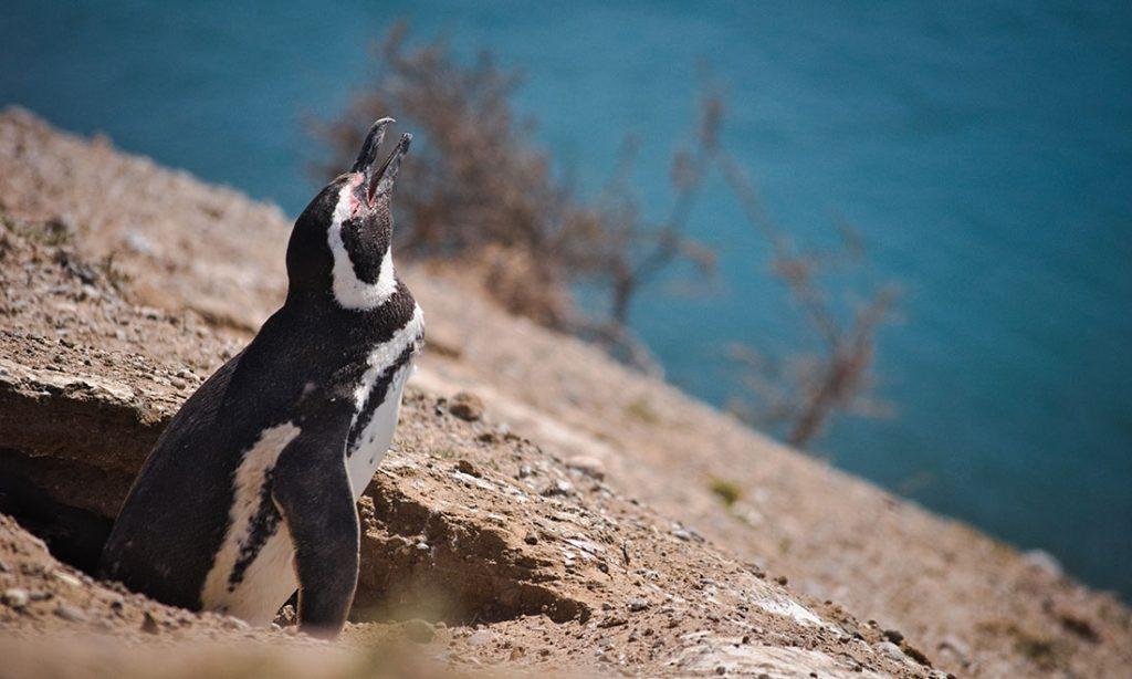 Pingvin, Valdeshalvön