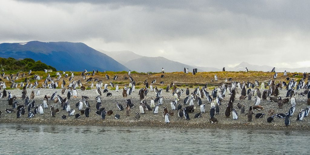 Pingviner, Valdes, argentina