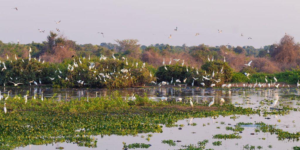 Vilt fågelliv i Pantanal, Brasilien