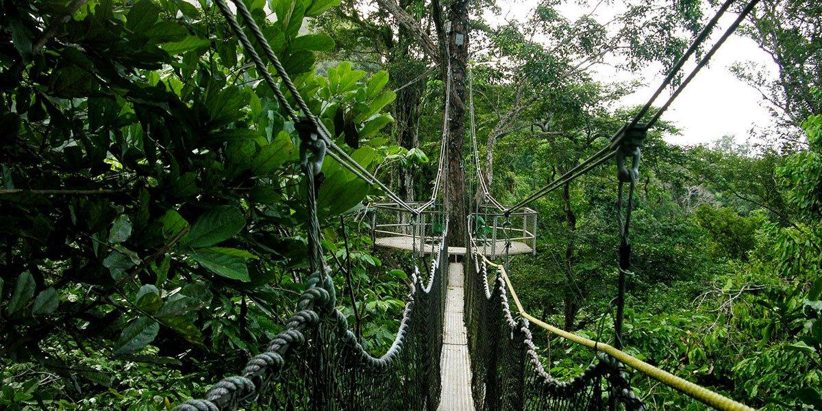 Iwokrama walkway, Guyana