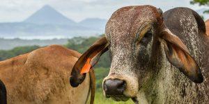 Lantbruksresa med Sydamerikaexperten