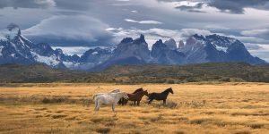 Hästar i Torres del Paine, Chile