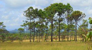 Belize Natur