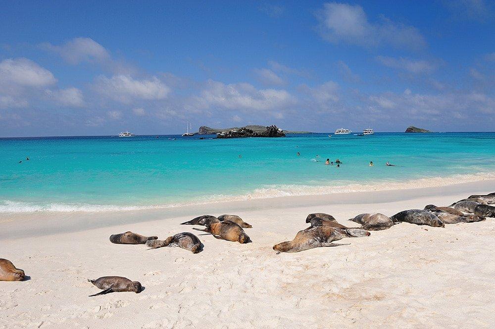 Pikaia Lodge, Galapagos